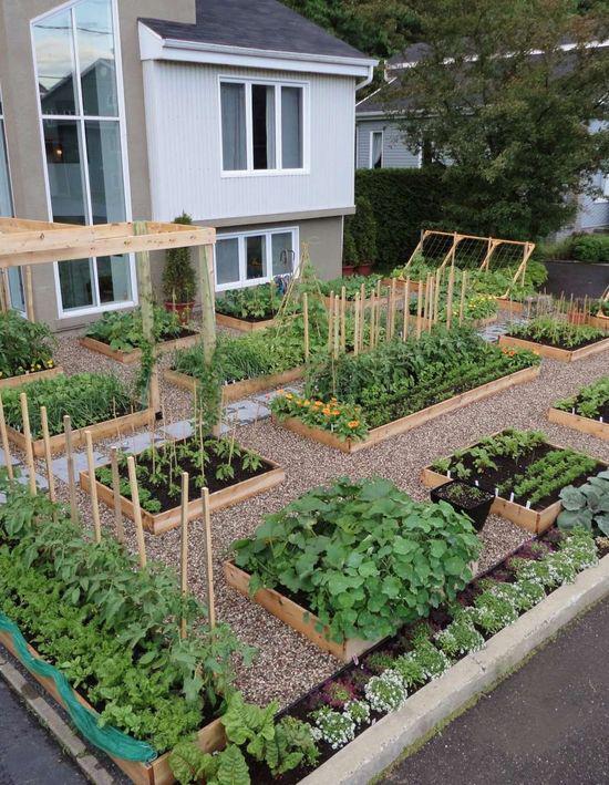 Diy vegetable garden backyard